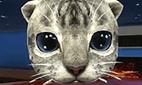 Katzensimulator 3D